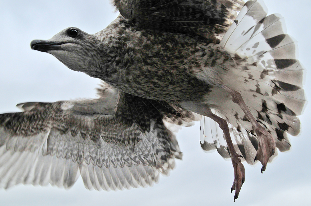 vogelflug_michael_haus